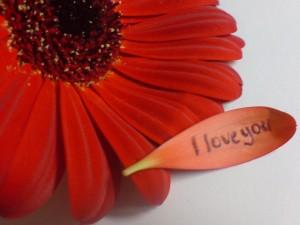 Te amo escrito en el pétalo de una flor