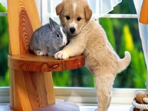 Cachorro junto a un conejo gris