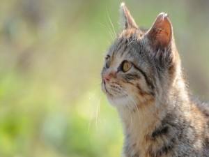 Bonito gato viviendo en libertad