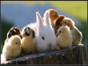 Conejo rodeado de pollitos