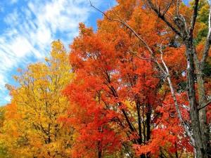 Árboles coloridos en otoño