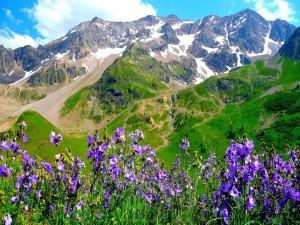 Flores color púrpura en la montaña