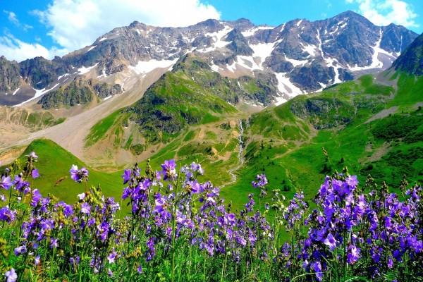 De Flores En La Montana: Flores Color Púrpura En La Montaña (61462