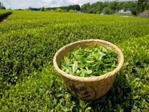 Hojas de té en una canasta