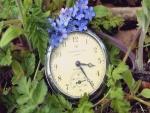 Pequeñas flores sobre un reloj