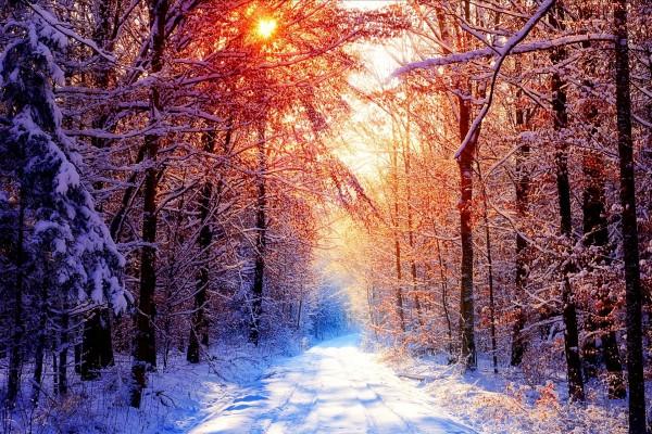 Camino forestal en invierno