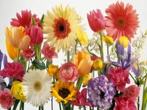 Coloridas flores de verano