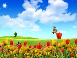 Mariposas en un campo de tulipanes