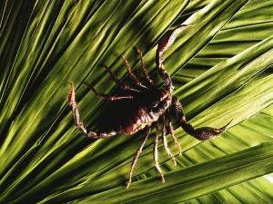 Escorpión sobre una hojas verdes