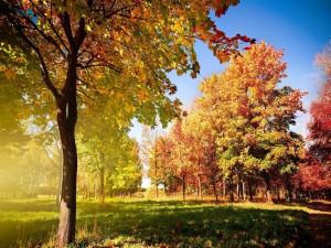 Sol brillando sobre los árboles otoñales