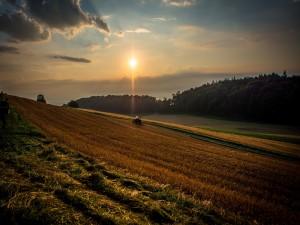 Trabajando en el campo a la salida del sol