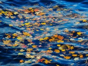 Hojas otoñales flotando en el agua