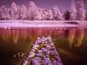 Árboles reflejados en la orilla pedregosa de un río