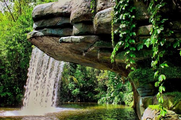 Cascada cayendo de una roca rodeada de árboles y arbustos