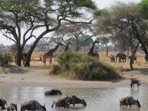 Animales africanos viviendo libres en su hábitat