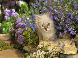 Gatito entre las flores de un jardín