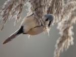 Pájaro sujeto a una rama