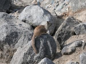 Ardilla sobre unas rocas