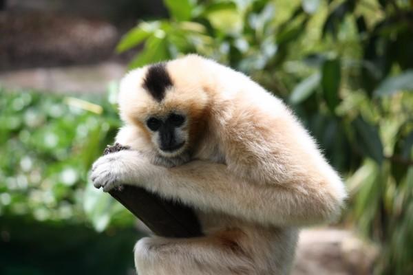 Mono sobre un palo