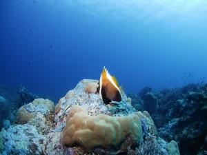 Pez amarillo en el fondo del mar