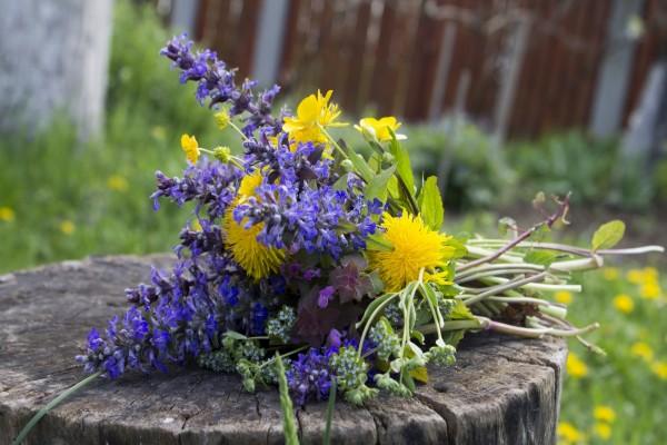 Flores silvestres sobre un tronco