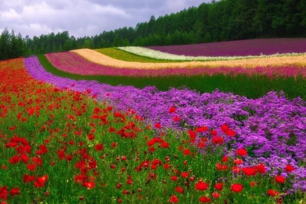 Flores dando color al campo