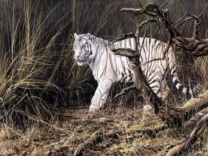 Un bonito tigre blanco caminando entre las plantas