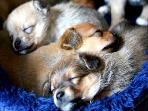 Tres perritos que duermen juntos