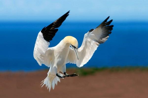 Una garza con las alas extendidas