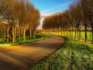 Carretera entre el campo y el bosque