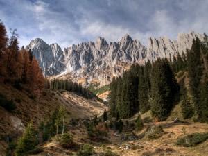 Pinos bajo las montañas rocosas