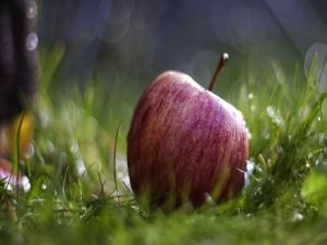 Manzana sobre la hierba