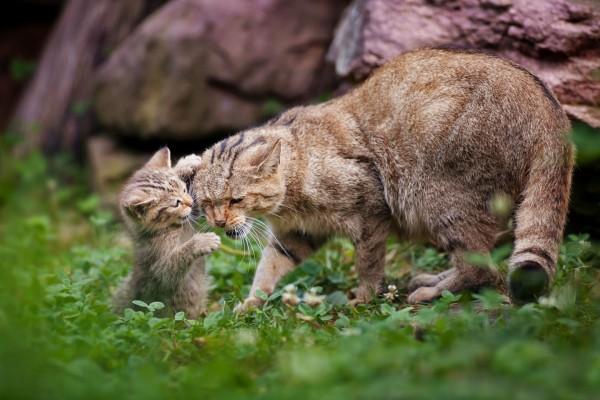 Gatito jugando con su madre