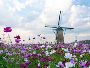 Molino de viento entre bonitas flores