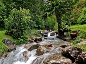 Arroyo cuyo cauce está cubierto de grandes rocas