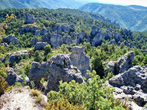 Árboles entre las grandes rocas