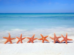 Estrellas de mar sobre la arena de una playa