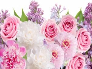 Magníficas peonías, lilas y rosas