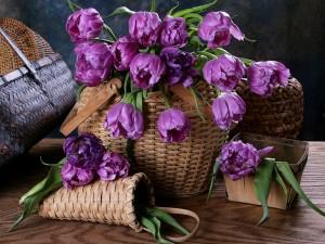 Cesta con tulipanes lilas