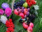 Cesta con frutas sobre hierba
