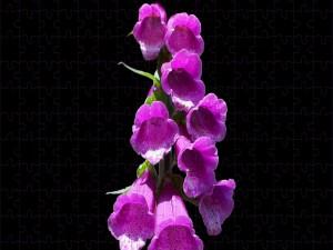 Flores color fucsia en fondo negro