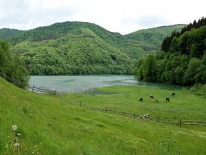 Vacas comiendo en el pasto verde