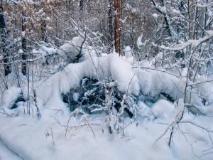 Ramas nevadas