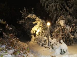 Luz en un parque nevado
