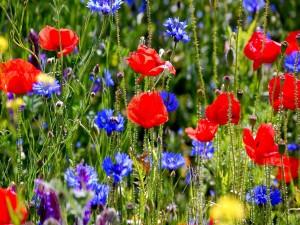Radiantes flores en el campo