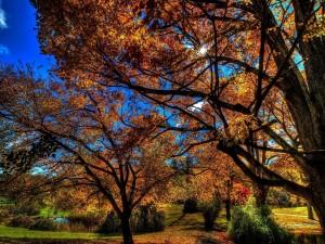 Sol brillando en un día de otoño