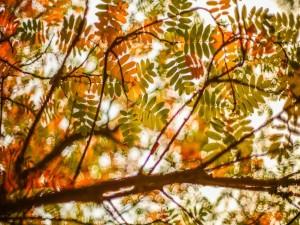 Hojas otoñales en las ramas de un árbol