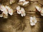 Ramas con flores blancas sobre una mesa de madera