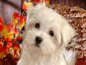 Un bonito perro blanco