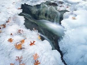 Hojas sobre el frío hielo